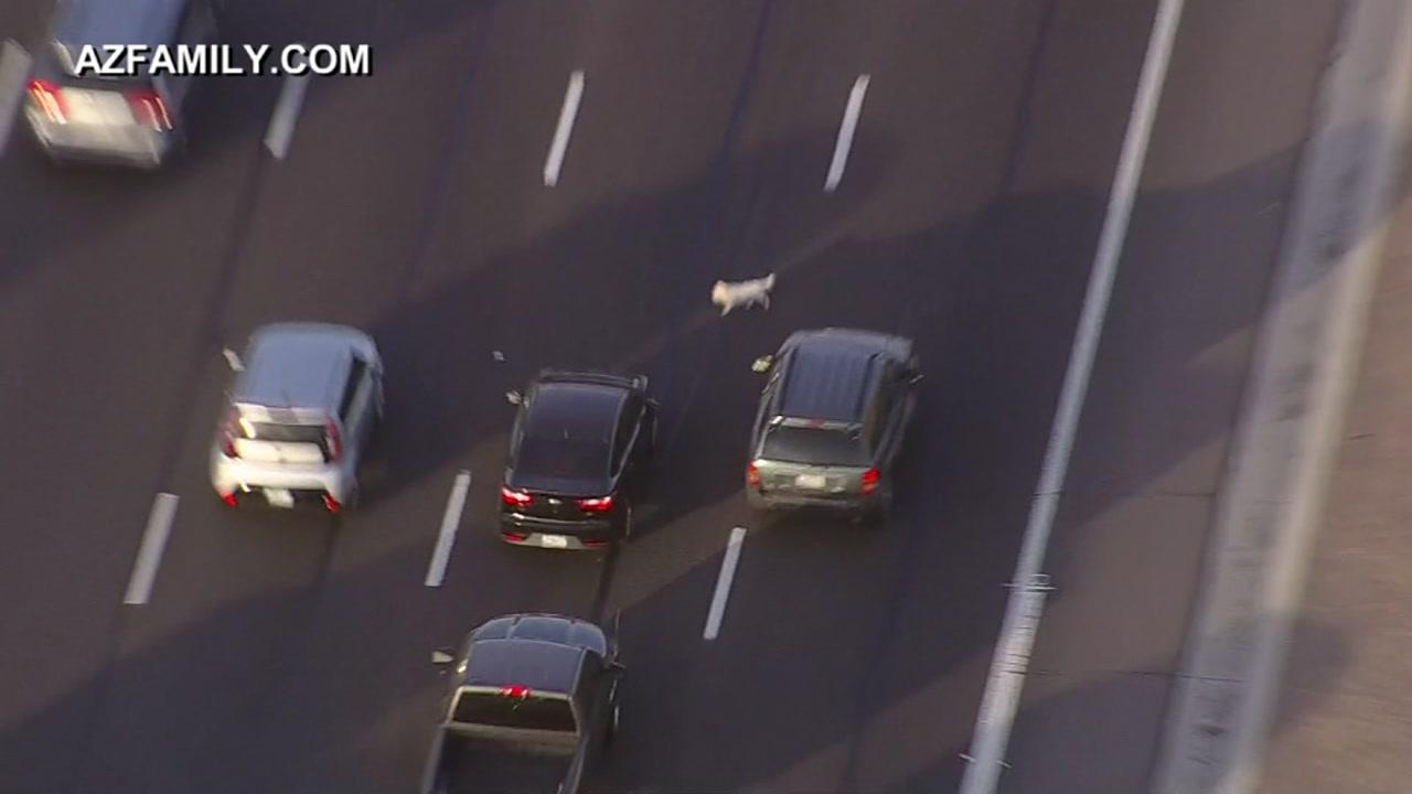 Puppy running on busy highway in AZ.
