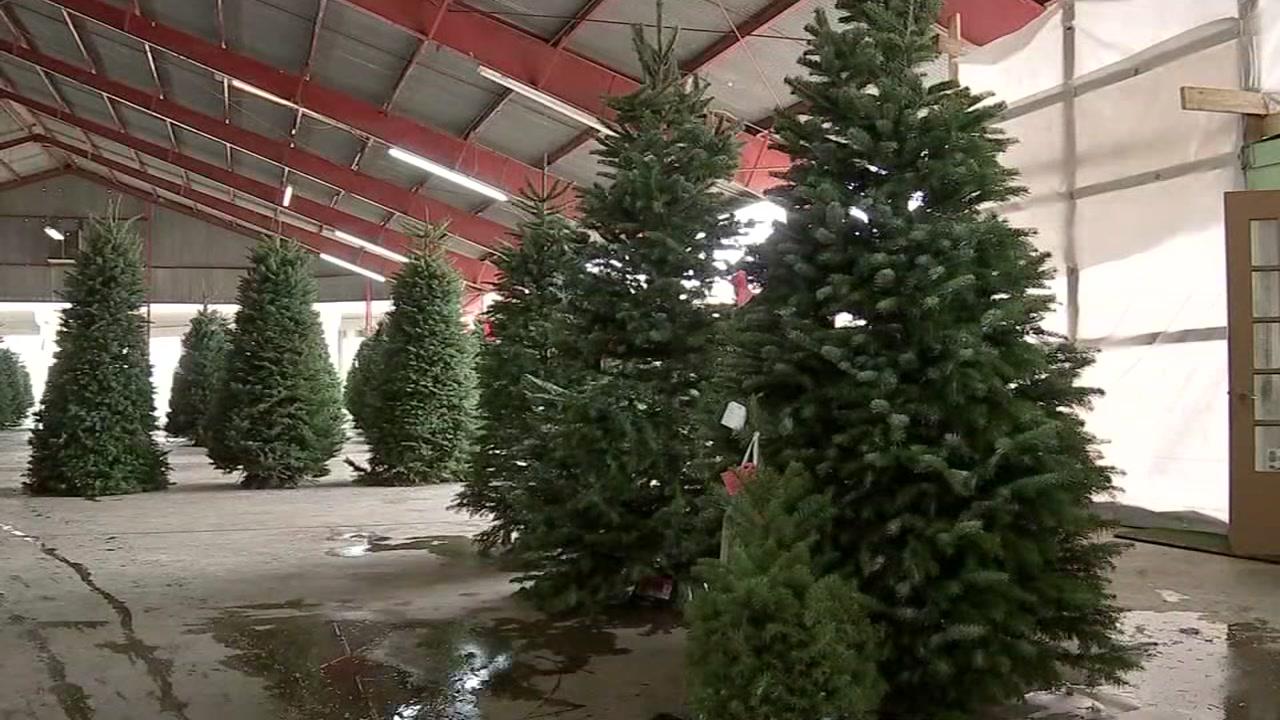 Ways to keep your Christmas tree fresh all season long.
