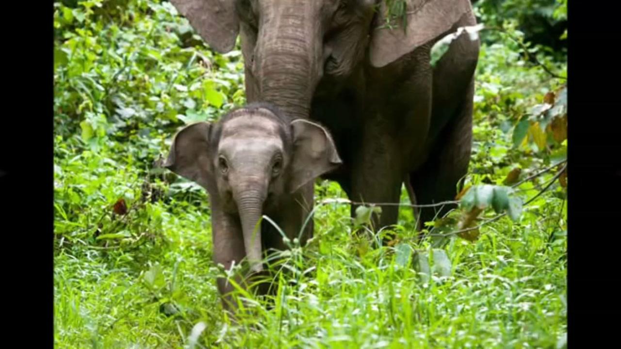 Houston Zoo Boreno Elephants