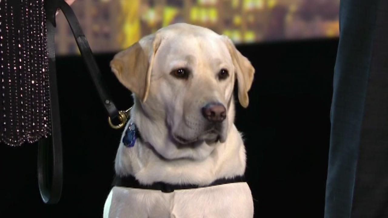 President George HW Bushs service dog, Sully, recognized at 2018 CNN Heroes awards