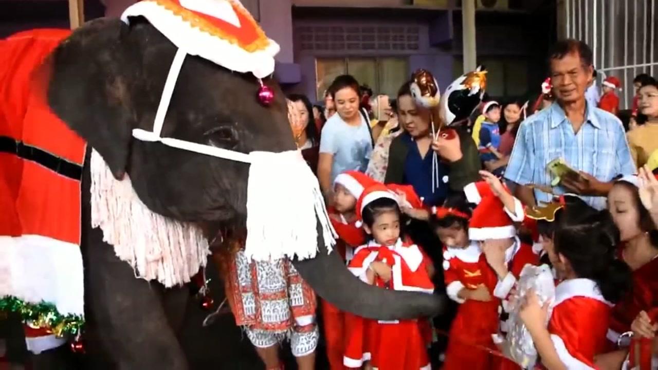 Elephant Christmas Parade in Thailand