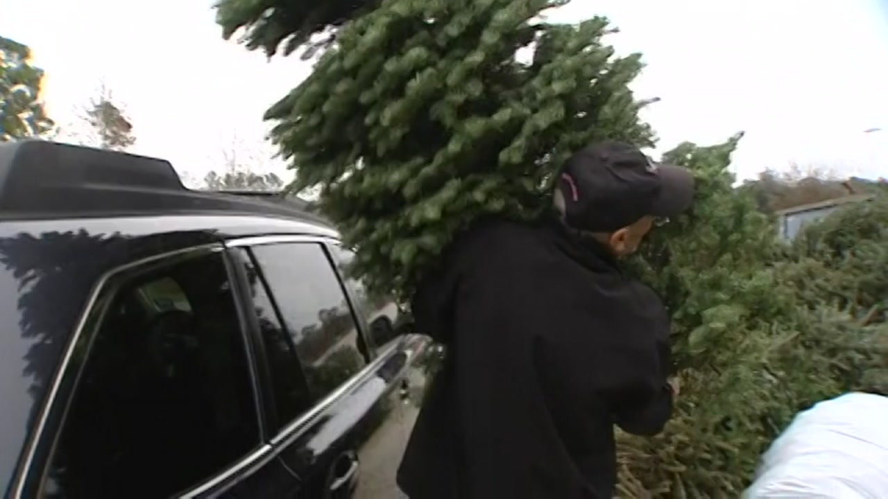 City of Houston will be collecting recycled Christmas trees.