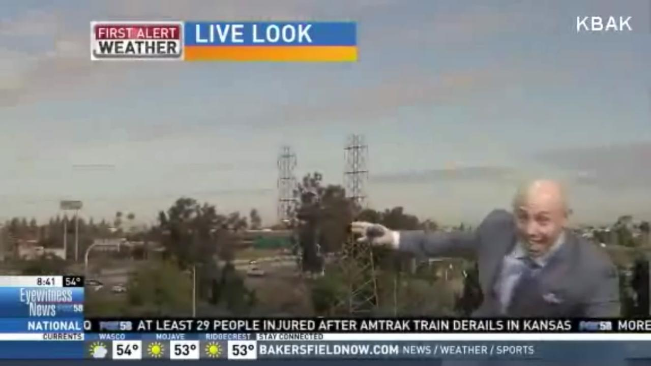 Weatherman scared by bird