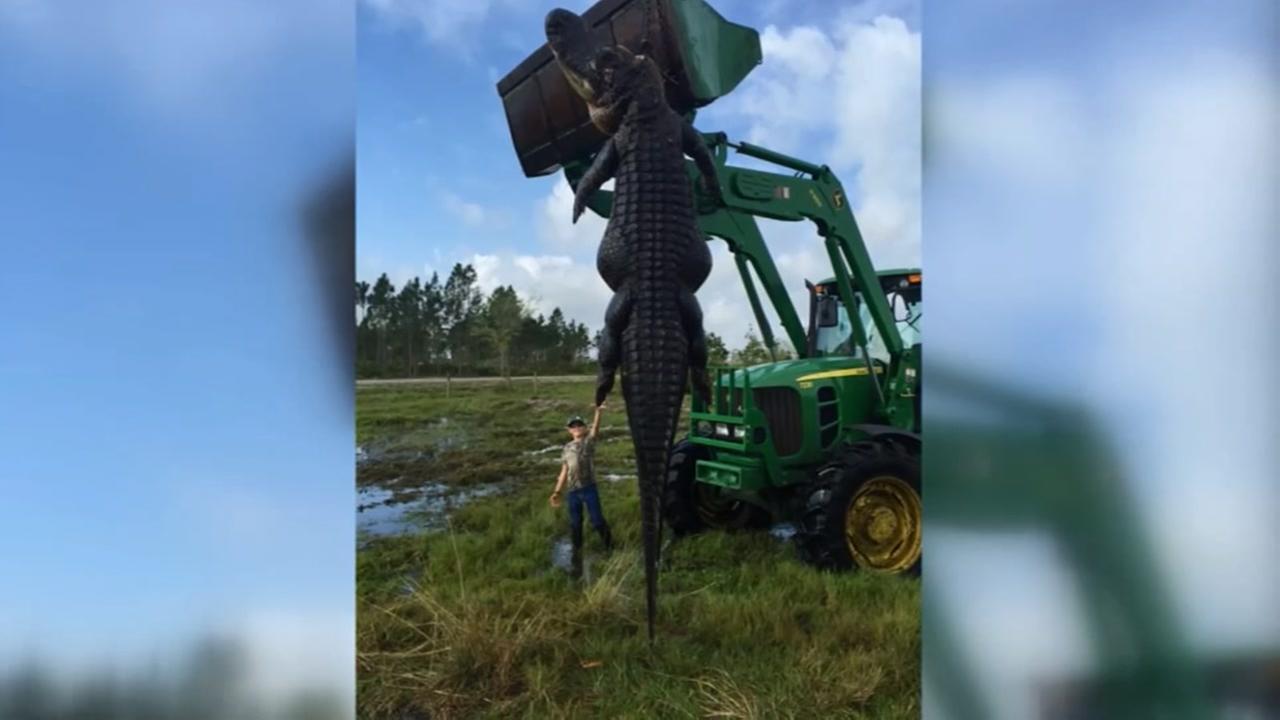 Big Fl Gator