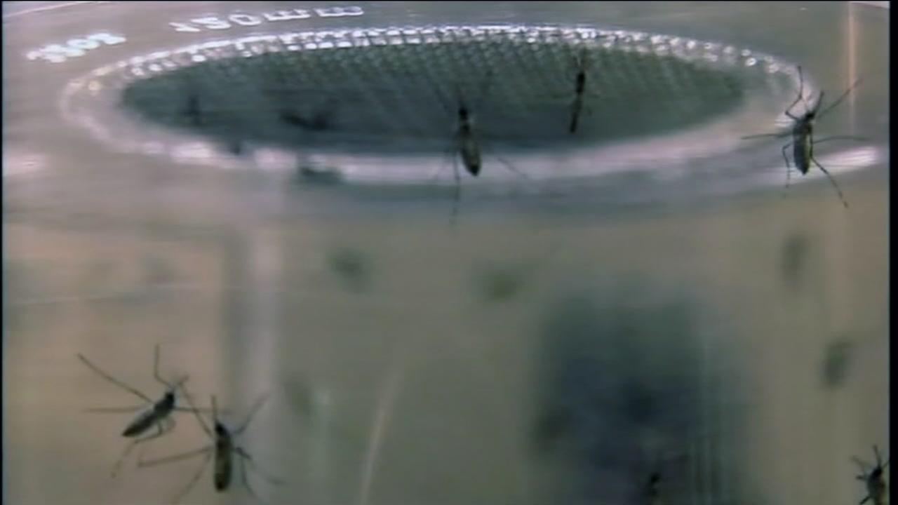 Separating Zika fact from fiction