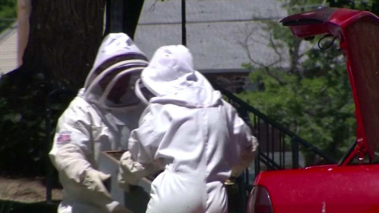 Police: Bee hive intentionally placed in trunk