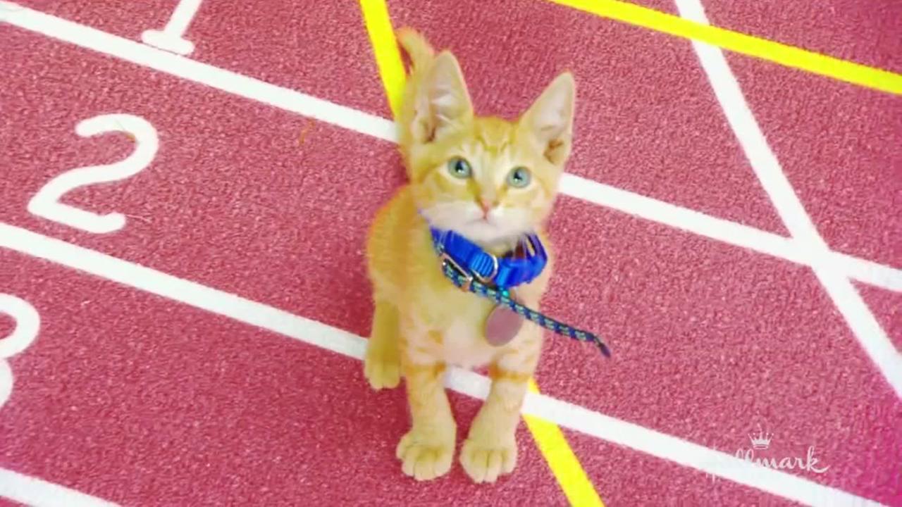 Kittens Track