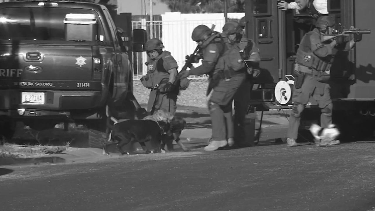 Dogs attack police K-9