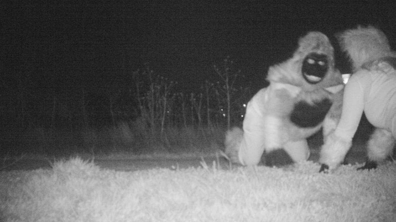 Citizens have fun with police by dressing as animals for game camera