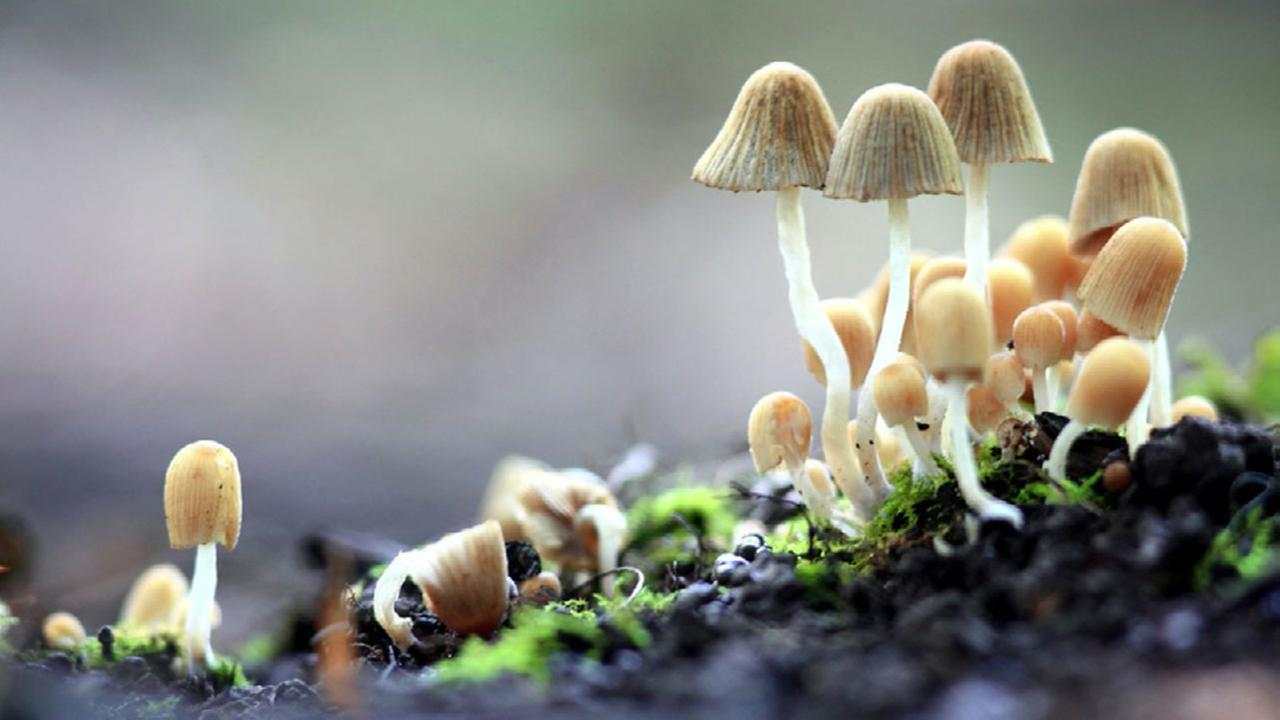 Magic mushrooms could ease depression