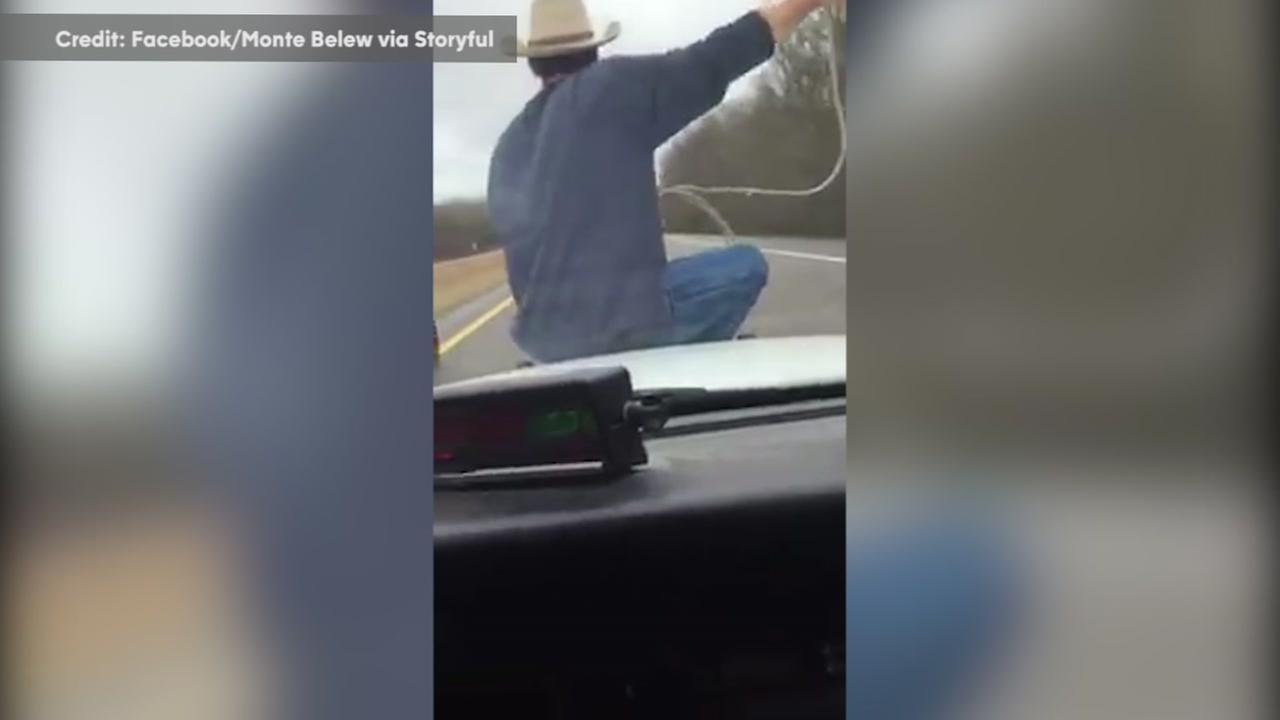 Cowboy rides police cruiser, snags runaway calf