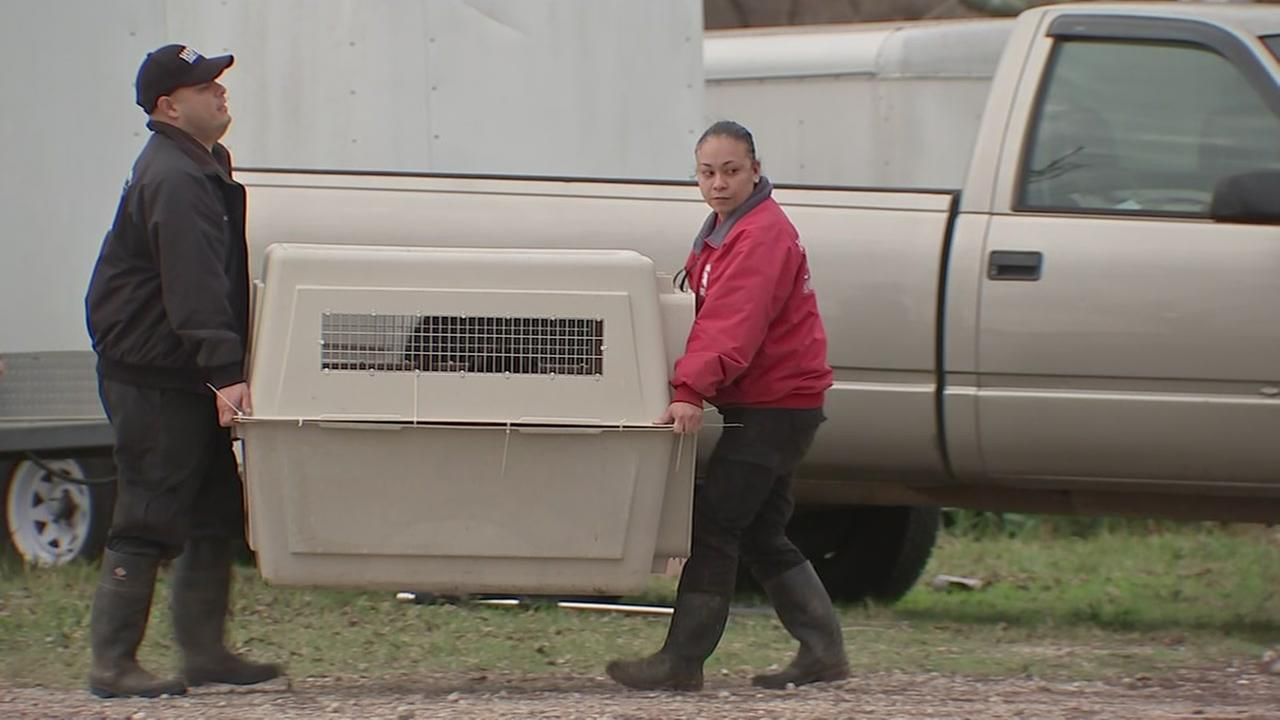 Long road to recovery for animals taken from Dayton shelter