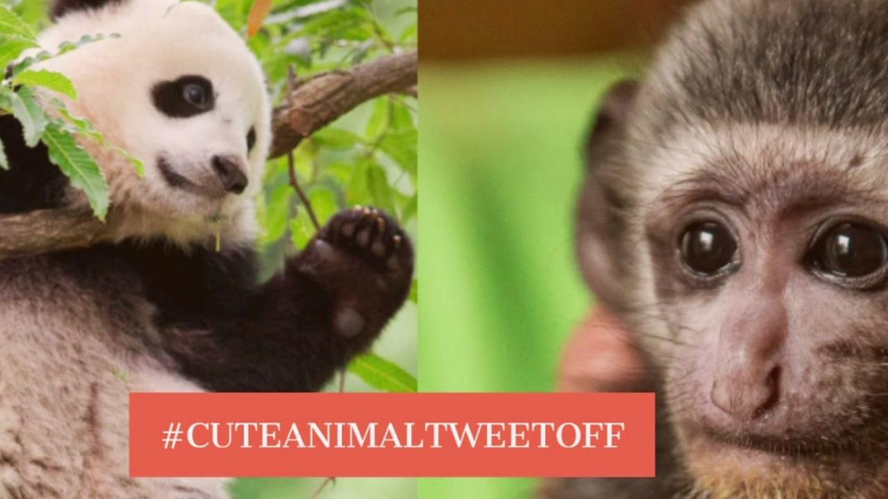 Cute animal alert! Zoos across the country tweet out their cutest animals