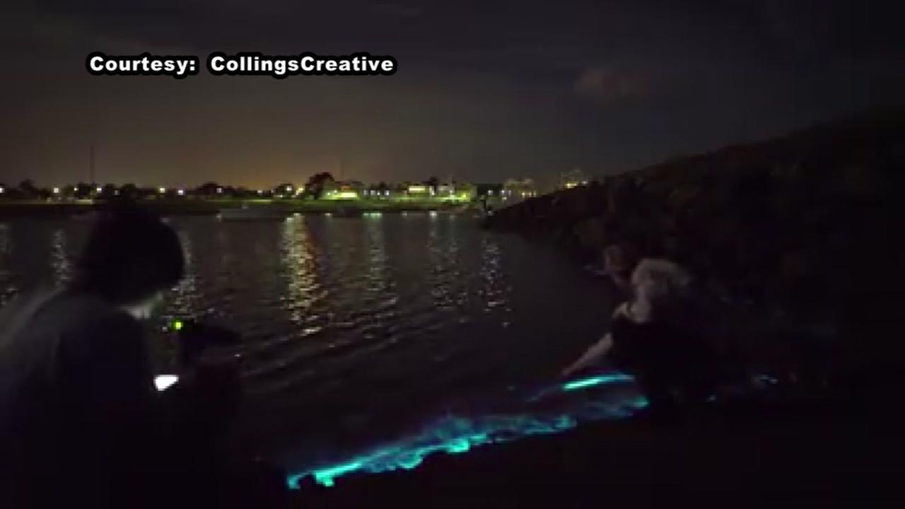 Dazzling bioluminescent algae shines on Tasmanian beach