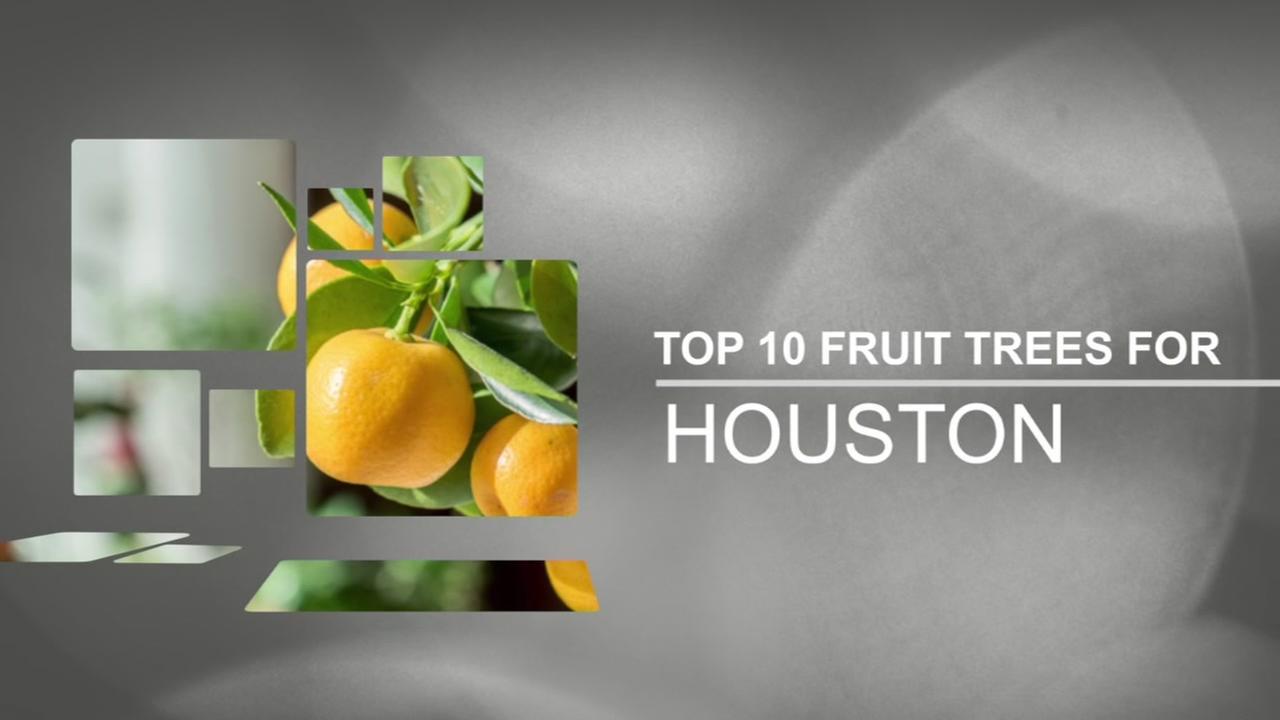 Top 10 fruit trees in Houston