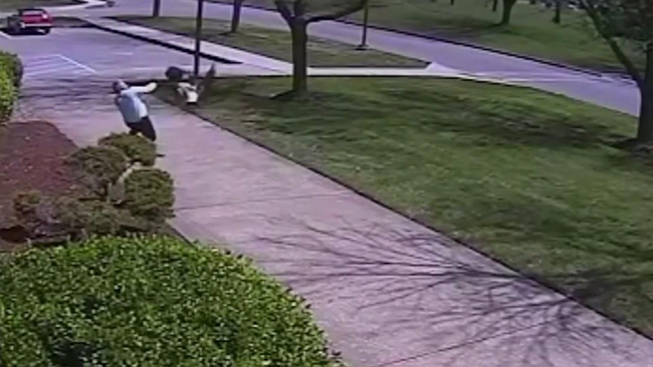 Goose attacks police detective