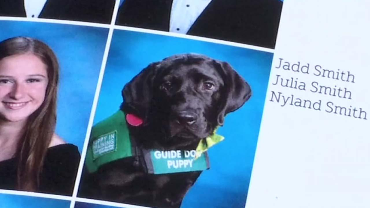 Guide dog graduating with high school senior