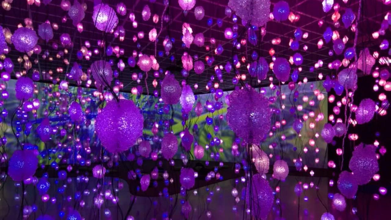 New dazzling light show comes to the Museum of Fine Arts Houston