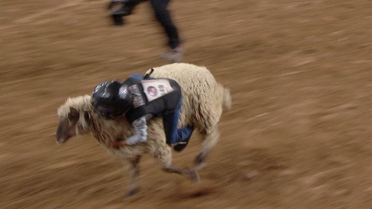 Mutton bustin this year? Sign up soon for Fort Bend County Fair