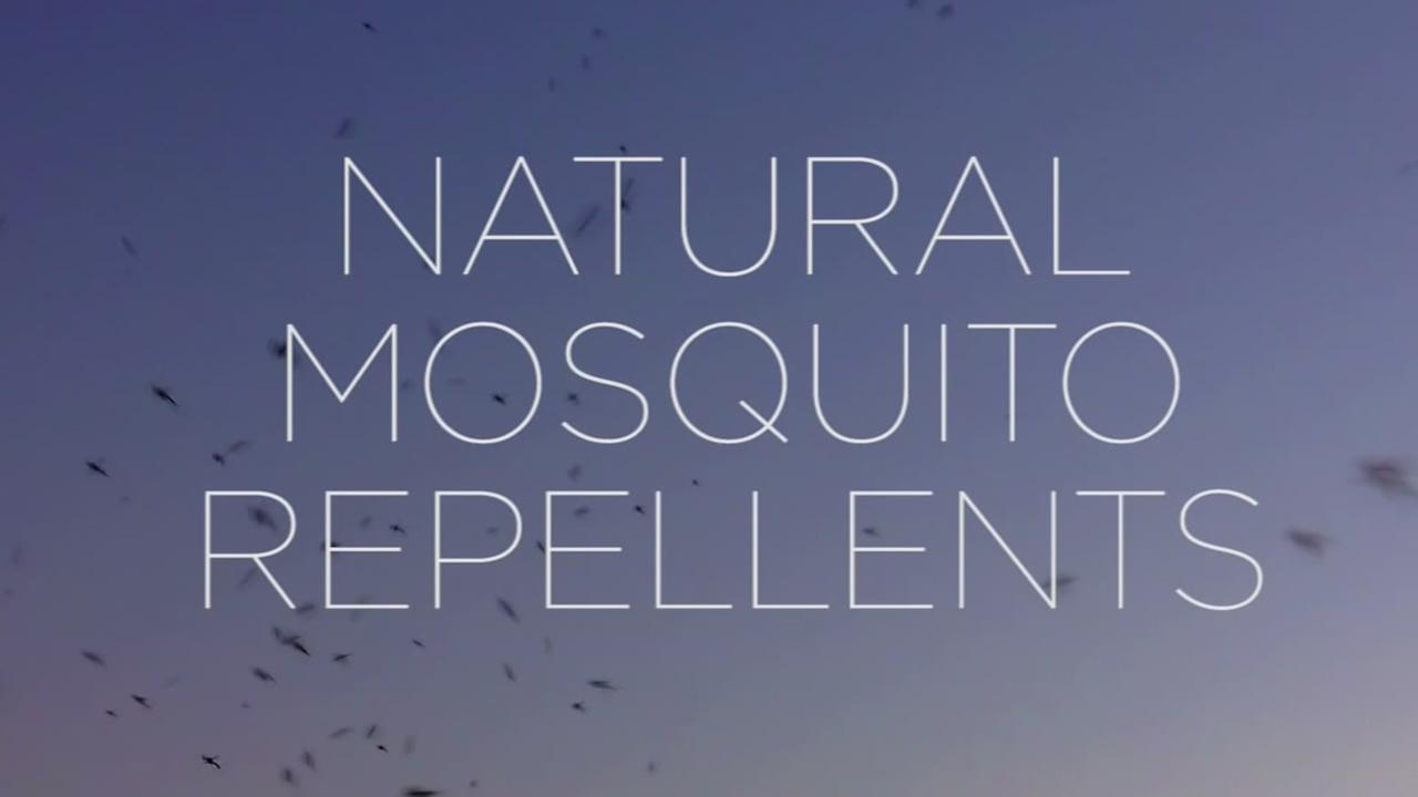 These plants are a natural mosquito repellent