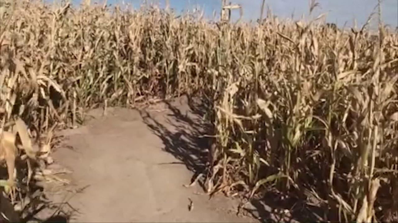 Boy goes missing in Utah corn maze