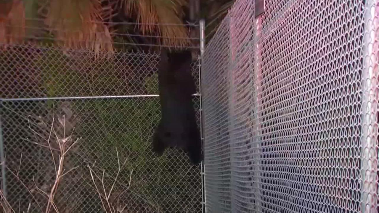 Traffic worker freaks out over bear