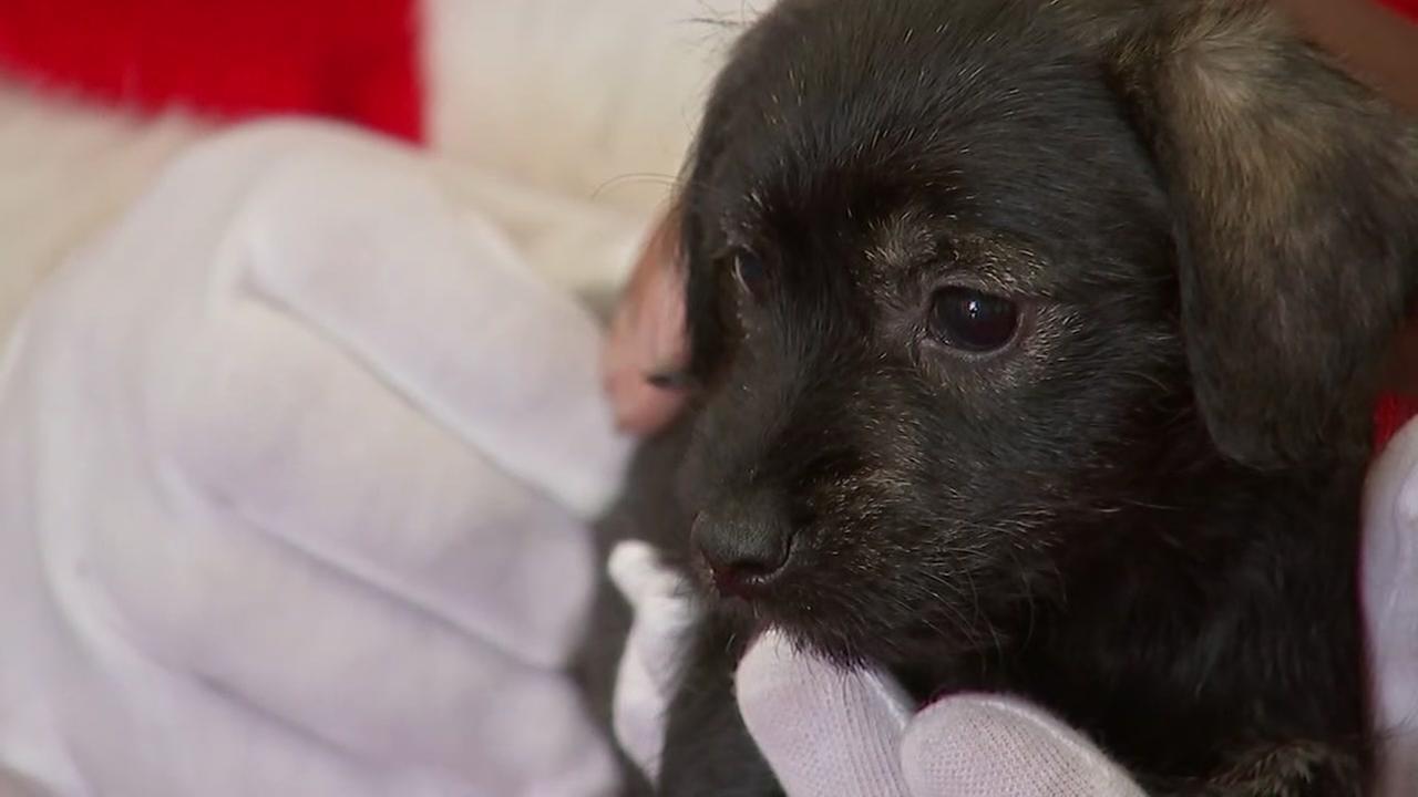 Houston pets ask Santa for a home for Christmas
