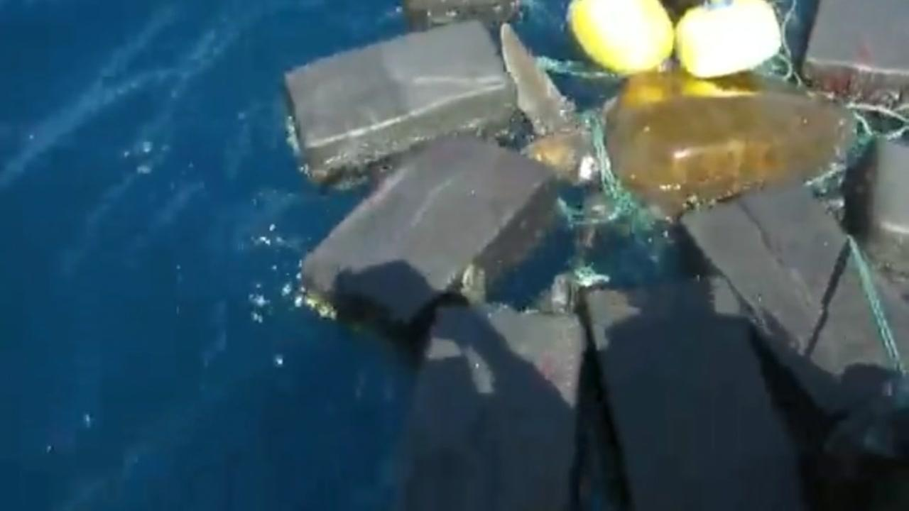 Turtle caught in contraband set free