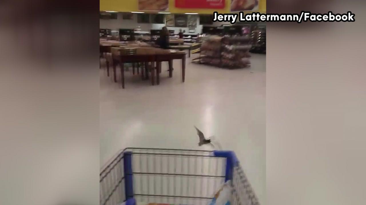 Bats at Walmart