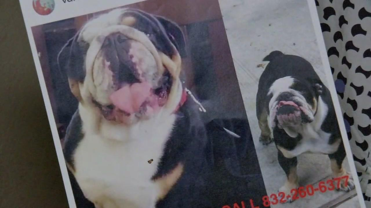 WANTED: Alleged thieves snatch English bulldog in Houston