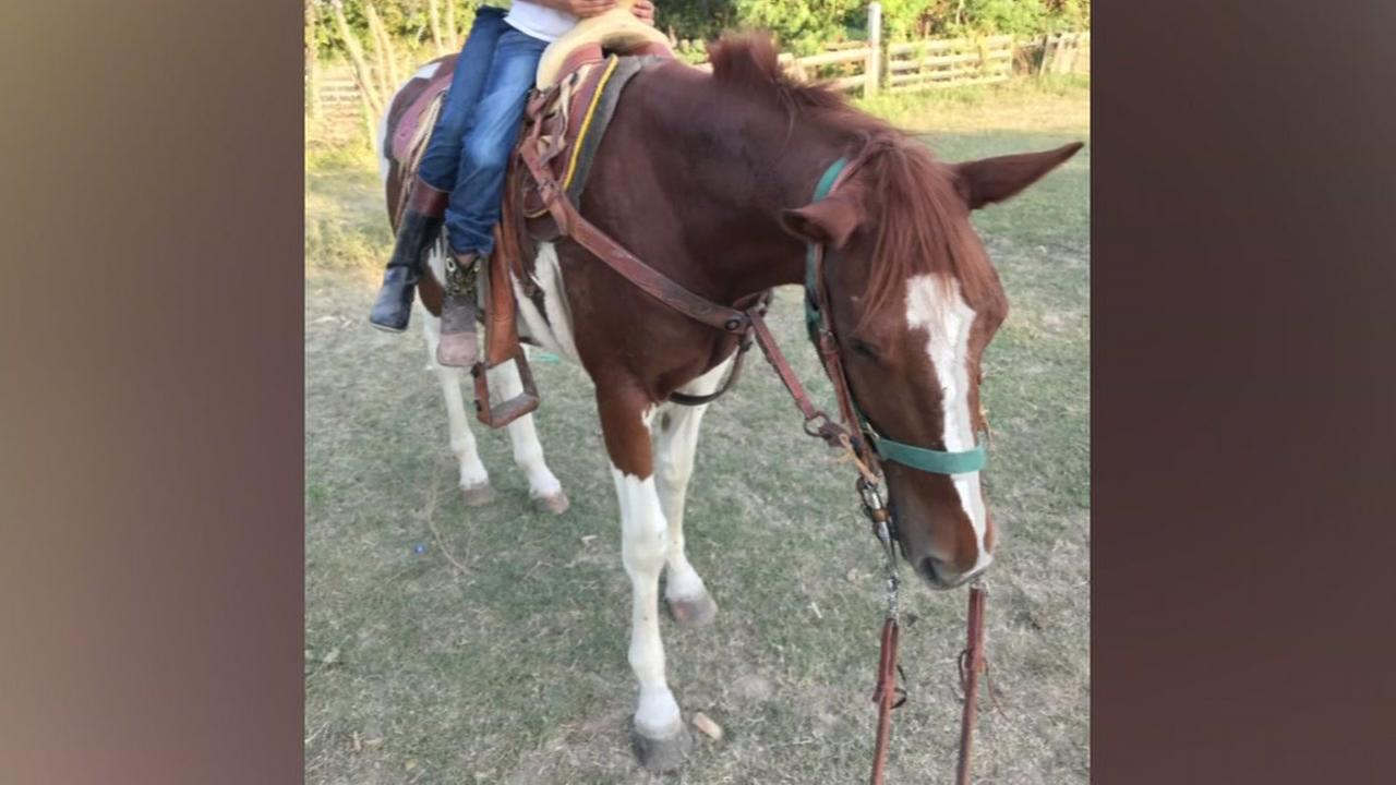 Owners on edge after theft of horse