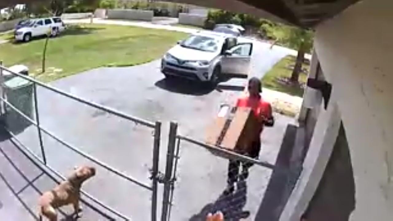 Amazon delivery driver drops package on puppy