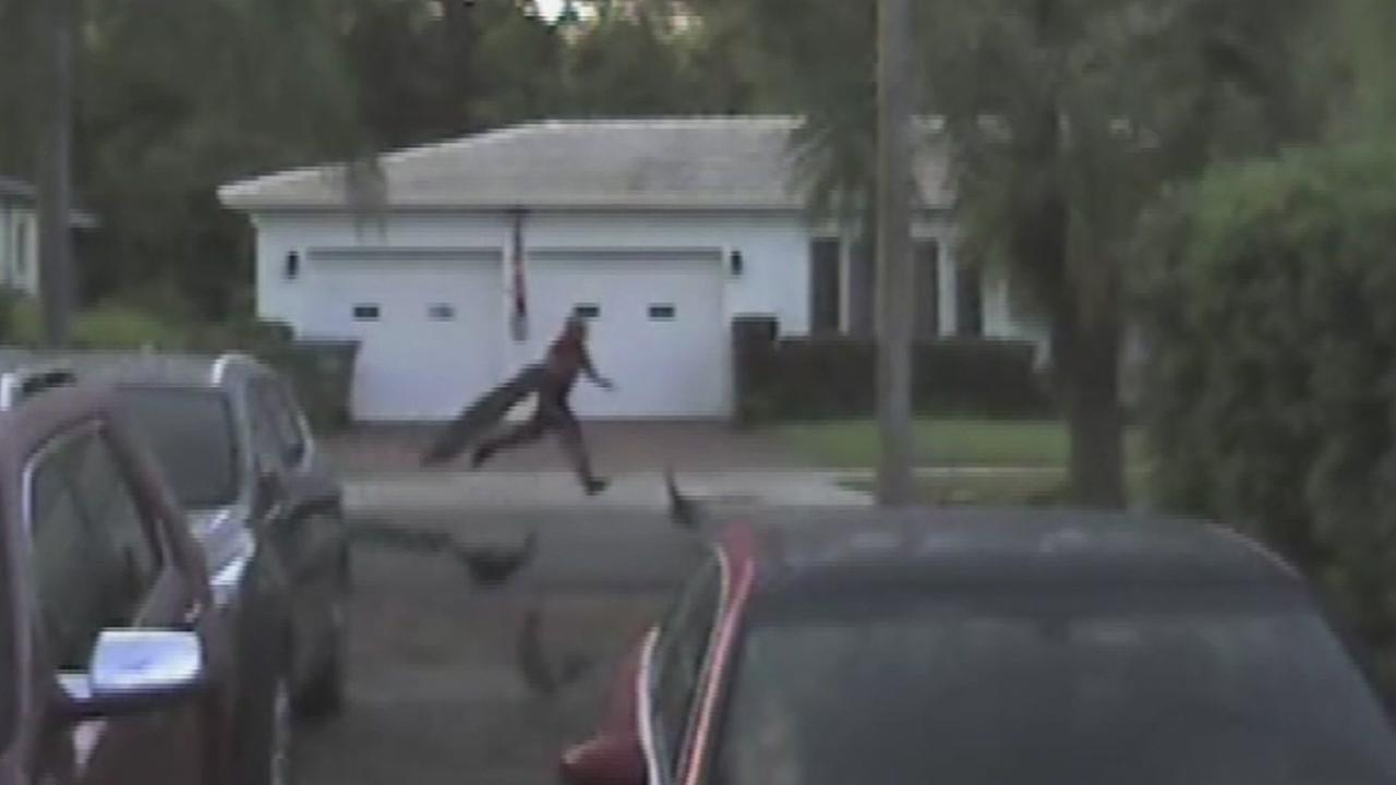 Florida man caught on video trying to steal peacocks