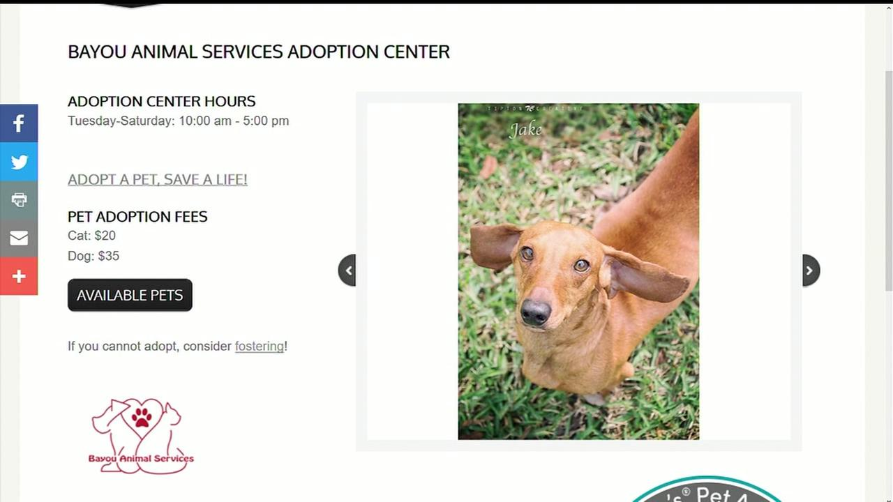 Overcrowded animal shelter