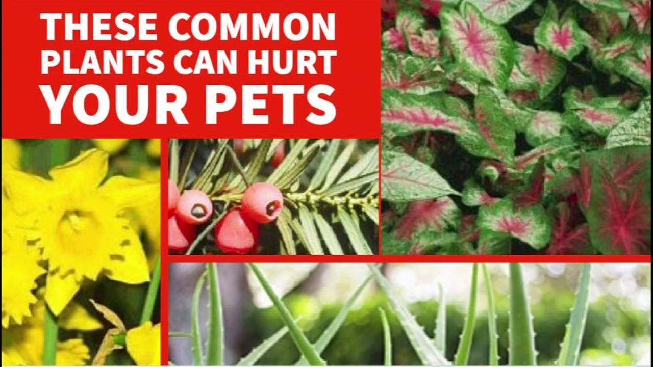These plants are commonly found in gardens and homes