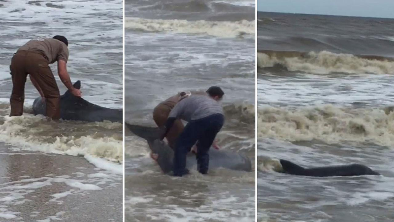 High Island dolphin rescue