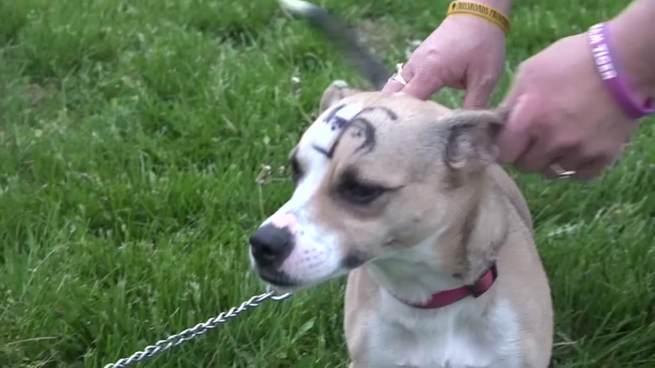 Once missing dog now bears a swastika on head.