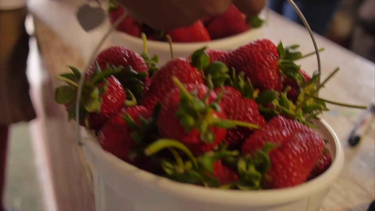 Inside look at the largest strawberry farm in Texas