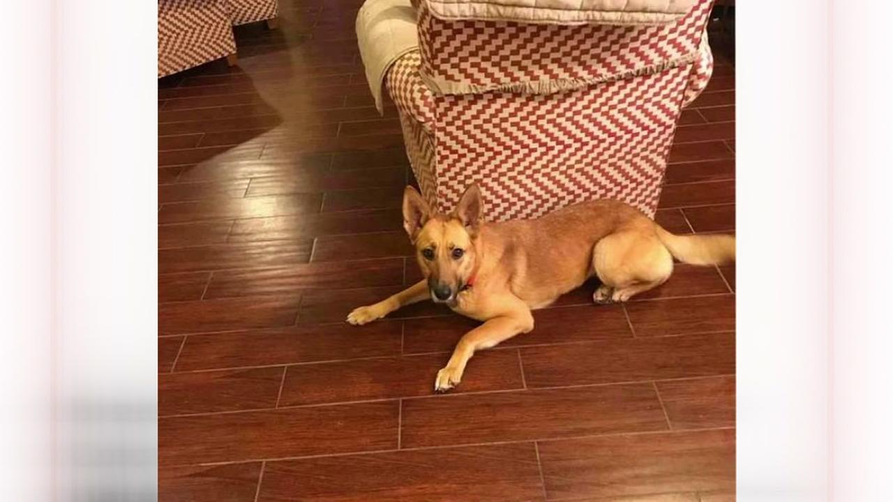 Family seeks info on their dog that was hit by a car