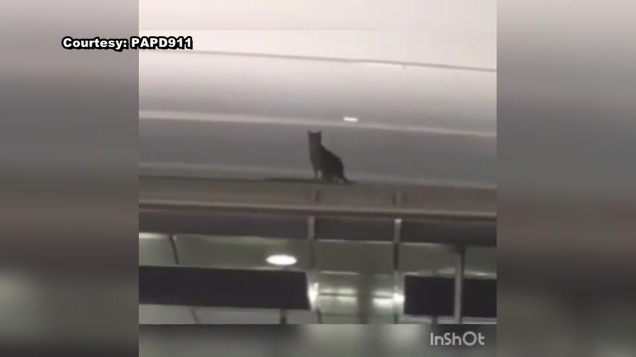 Rogue cat named Pepper rescued after running loose in JFK International Airport for 8 days