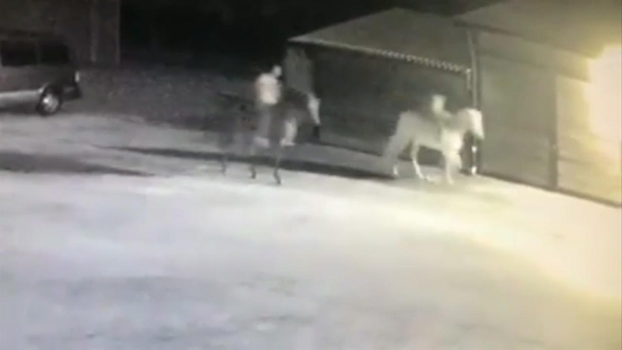 Horses stolen from Isabella Farms found at abandoned house