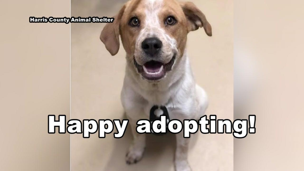 Free pet adoptions from Harris County Animal Shelter