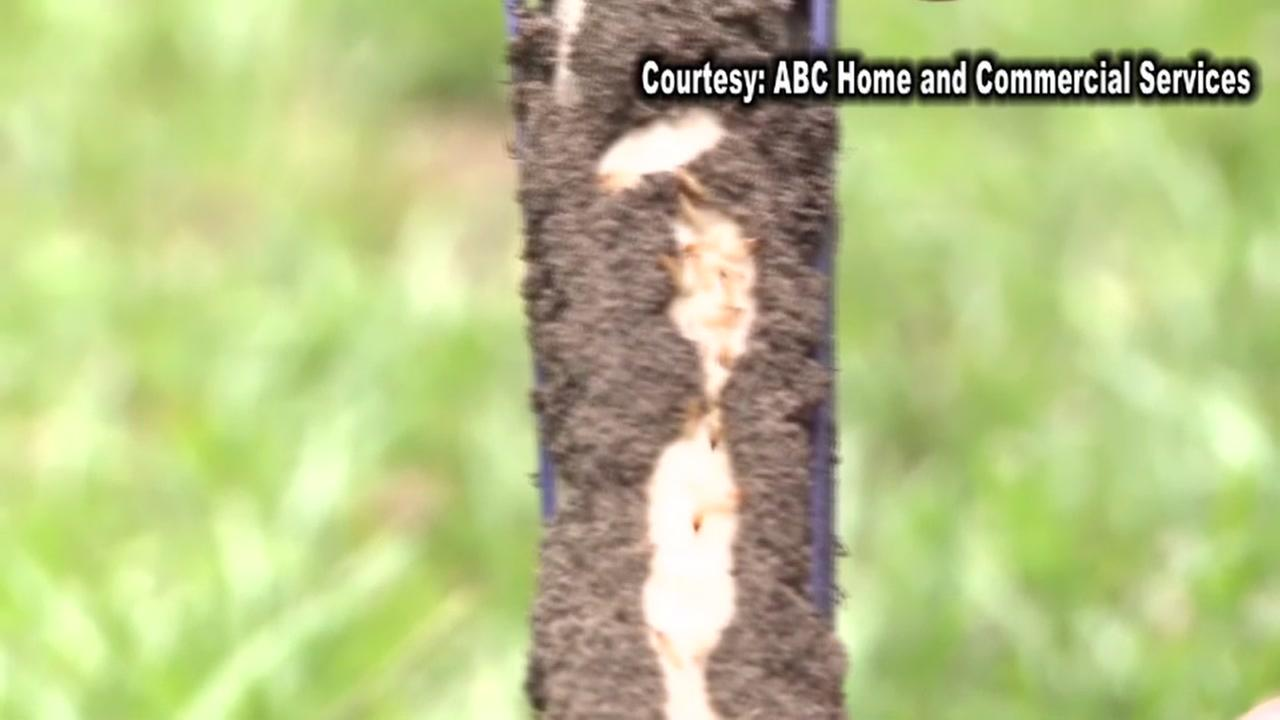 Warnings for termite season