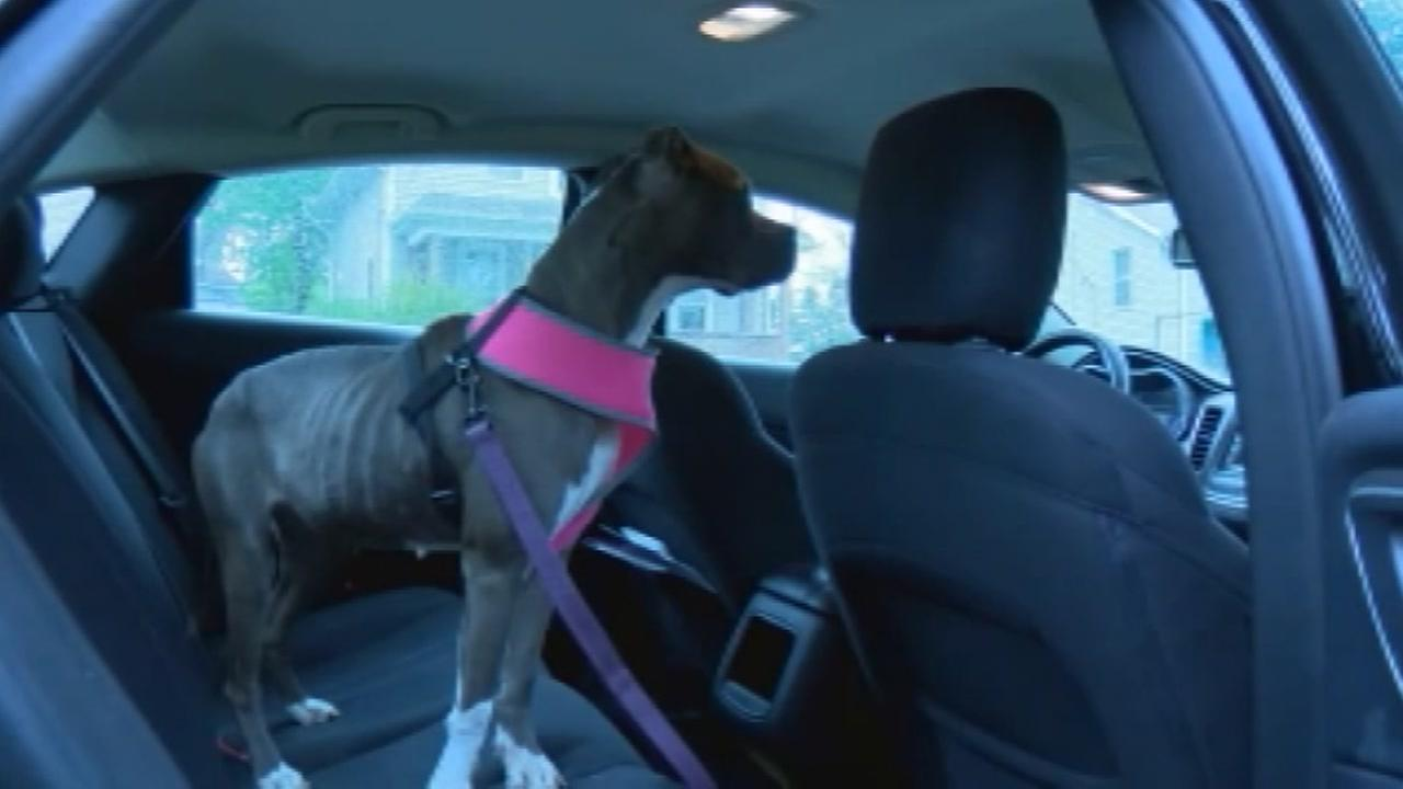 Real estate agent rescues dog after it is abandoned