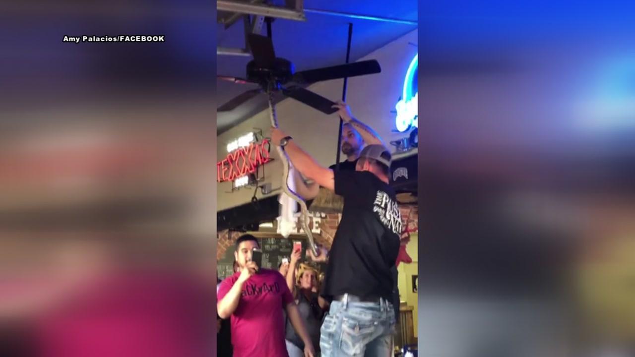 Bartender turns snake wrangler at Waco bar