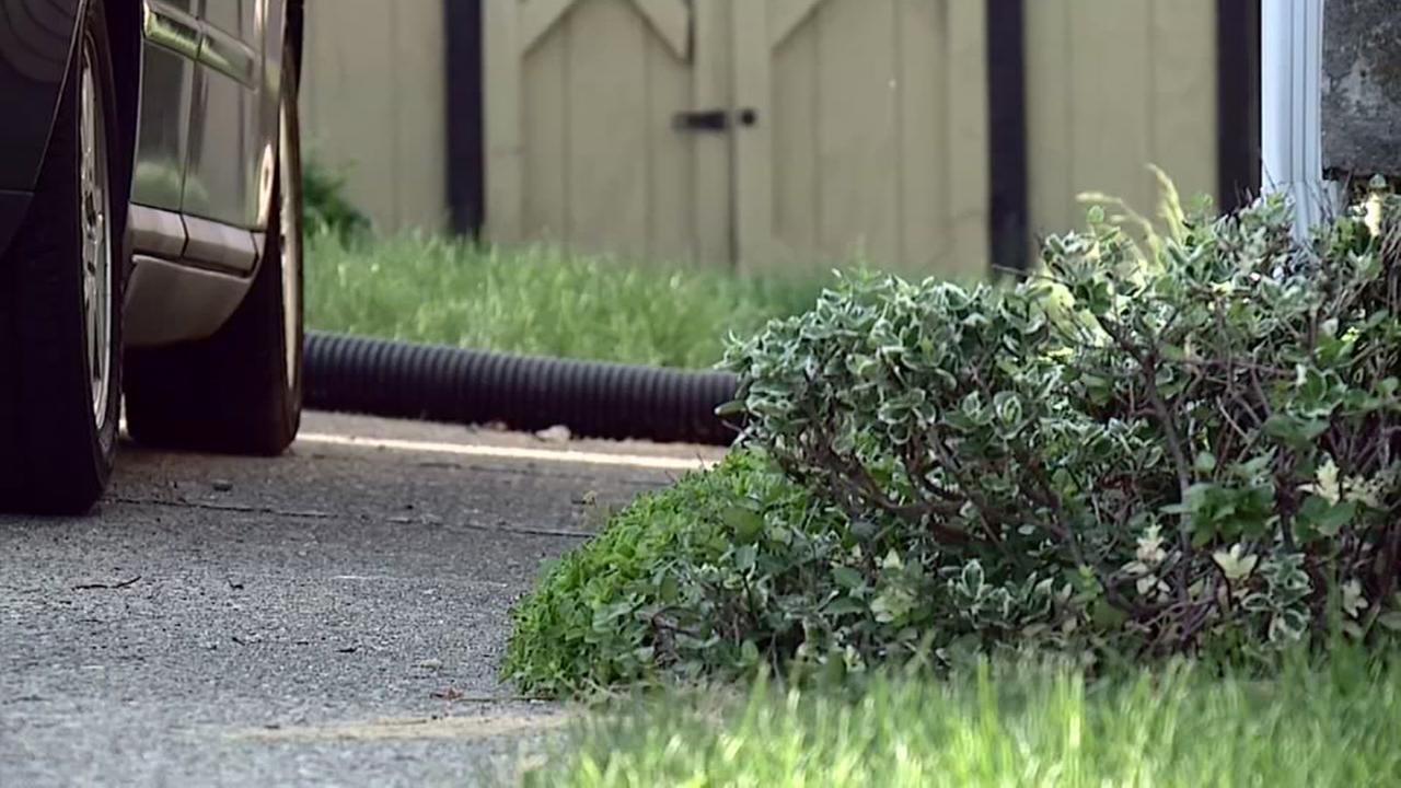 Python on loose in neighborhood
