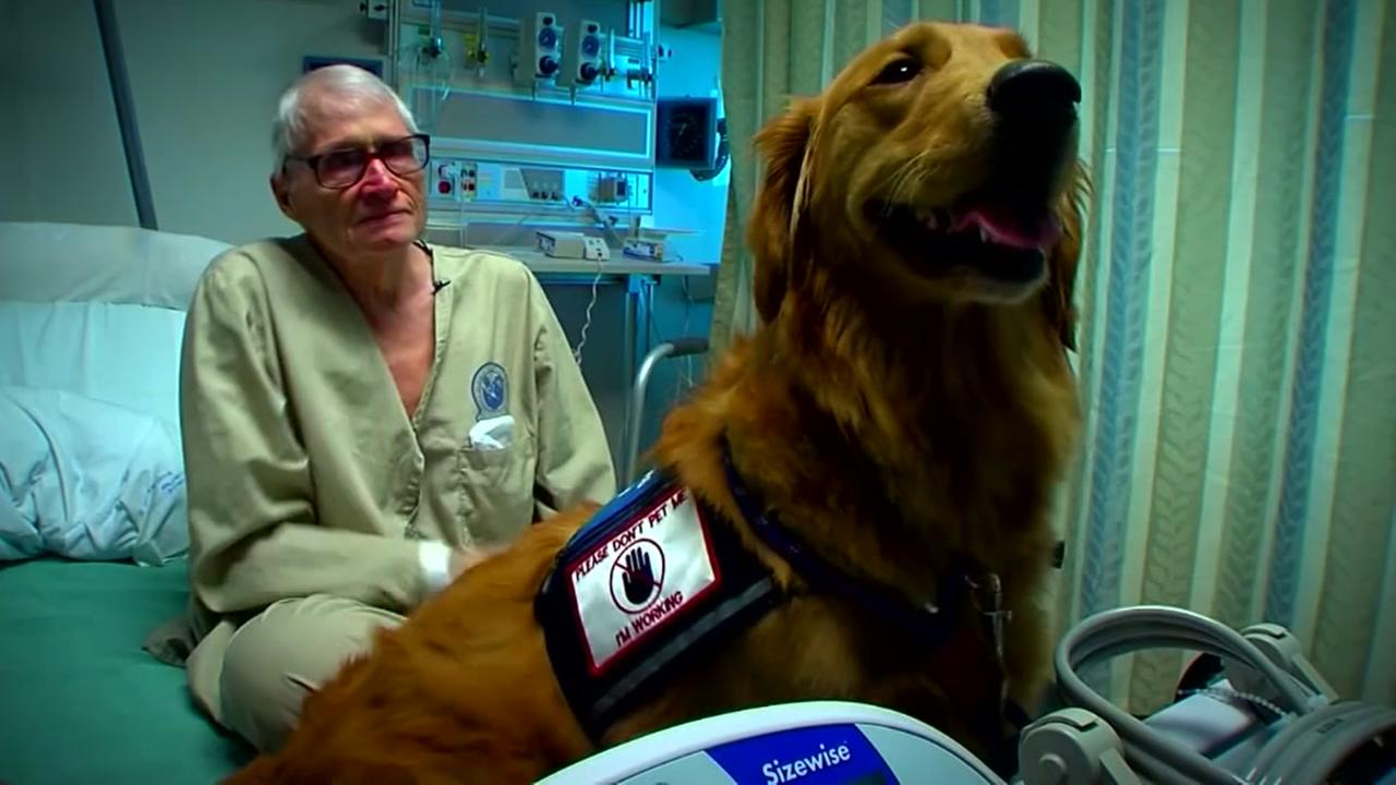 One service dog who helps those whove served