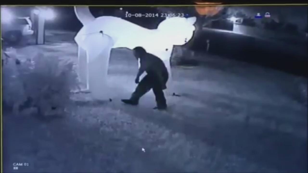 Cat burglar steals decoration