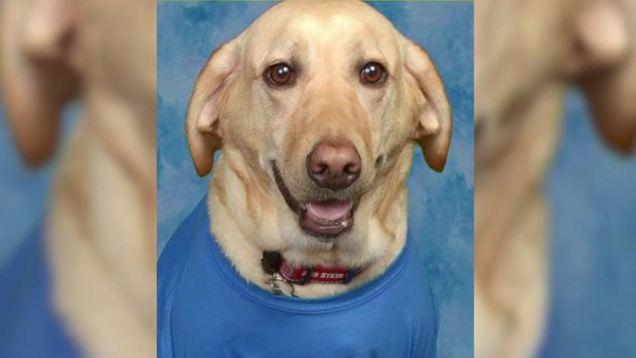 Service dog gets its own yearbook picture