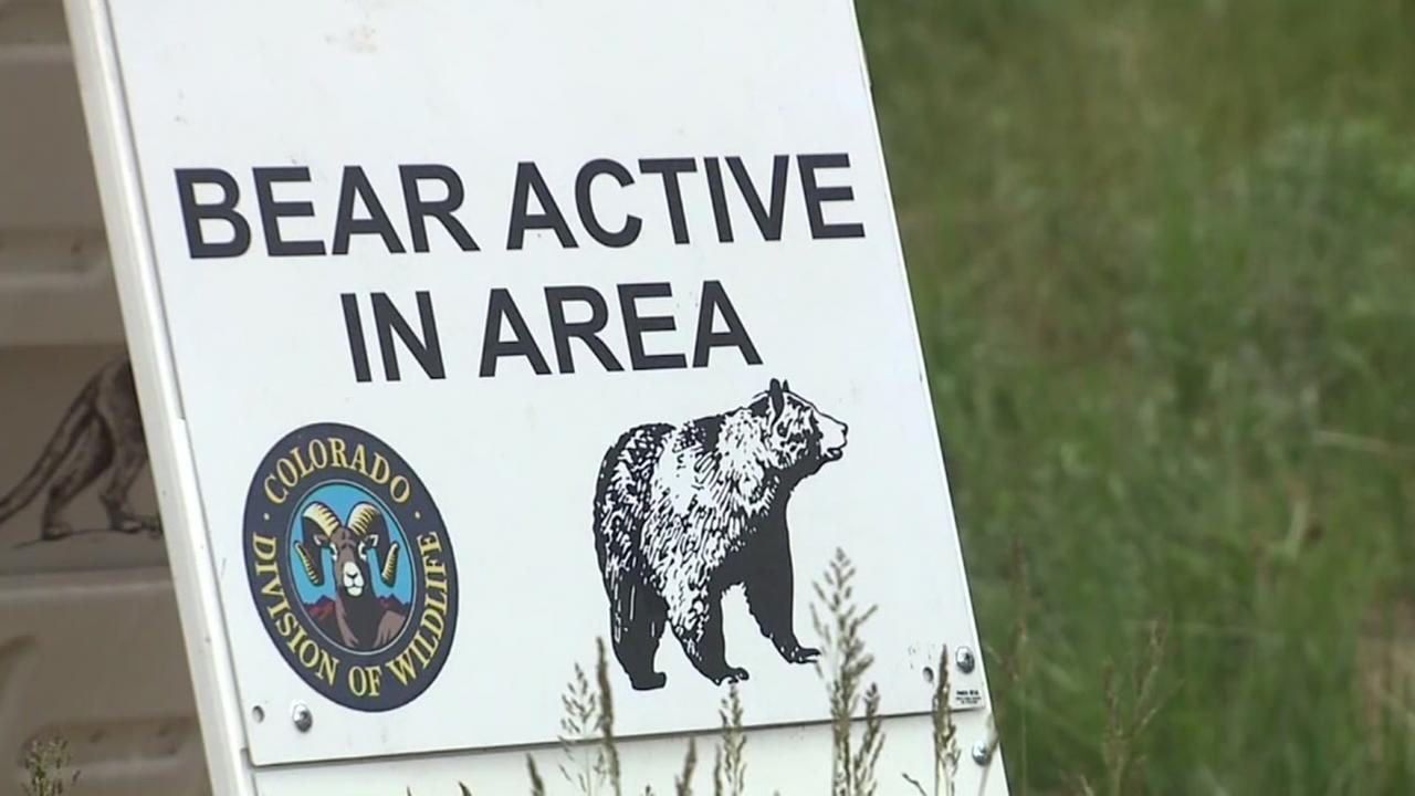Family attacked by bear while camping